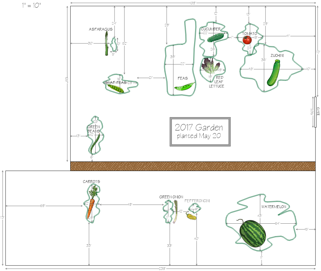 Architectural layout of my 2017 vegetable garden, created in Surfer 14.