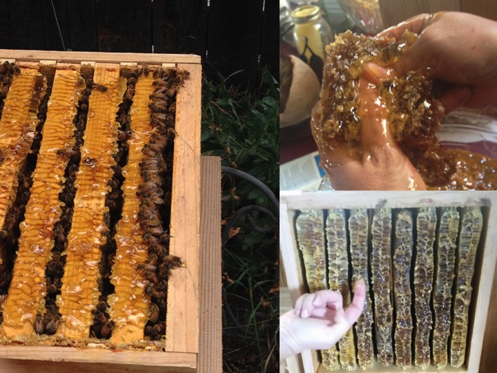 Honey-Harvest.jpg