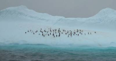 An Antarctic Adventure!