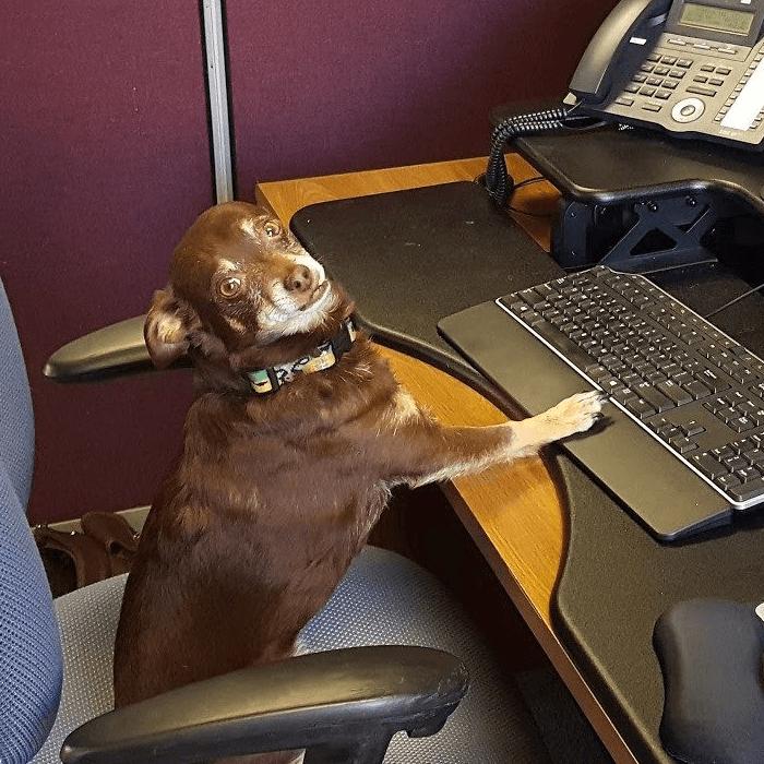 Golden Software Chief Pawsitivity Officer Janz