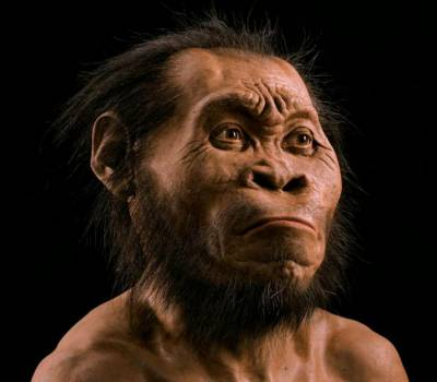 National Geographic sketch of Homo naledi